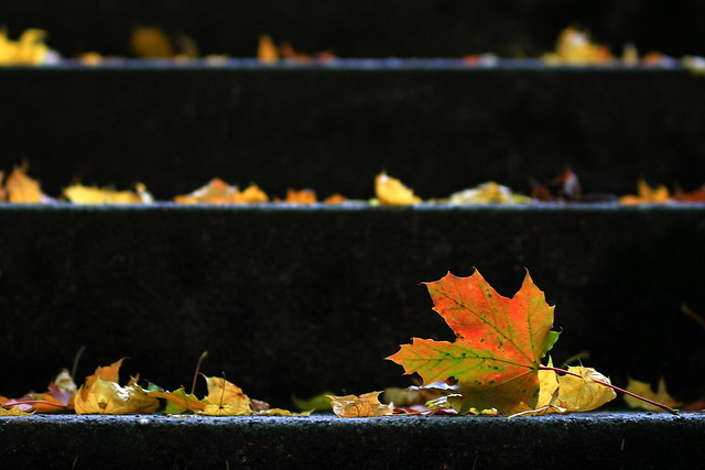 Herbsttreppe...