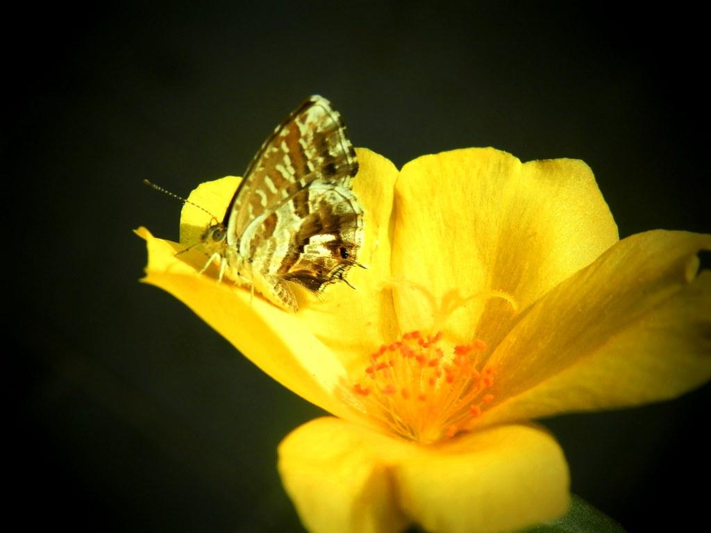 Farfallina in posa