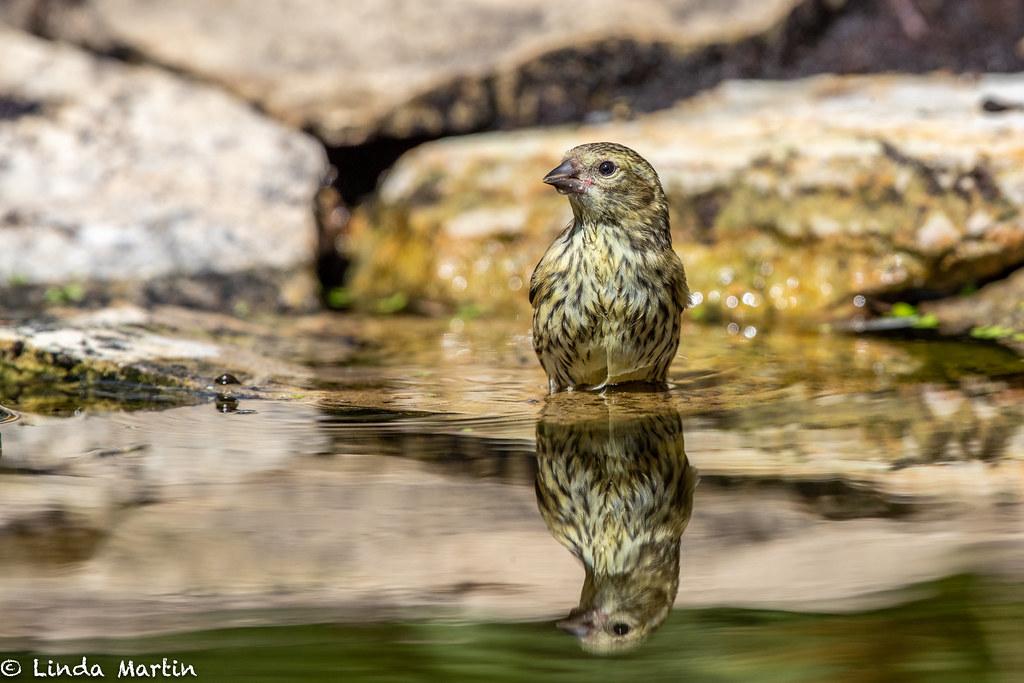 Bathtime Reflection