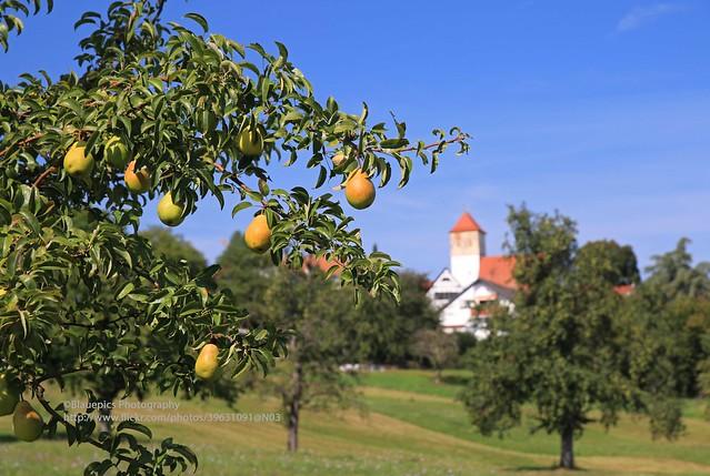 Hohengehren, Brühl, pears