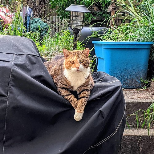 It's been 10 years with Annie in the #backyardcolony! Which means Annie is at least 12 now. She's actually pretty tame but seems much happier out back with her friends and family. She likes humans but has her limits! #feralcat #catsofbushwick | by Jimmy Legs