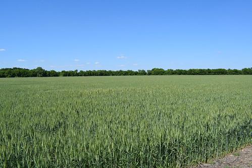 Farmland near Lavon Lake