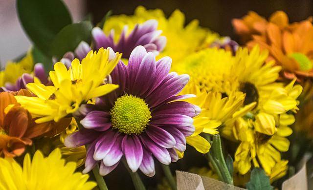 Supermarket Flowers 3 of 3