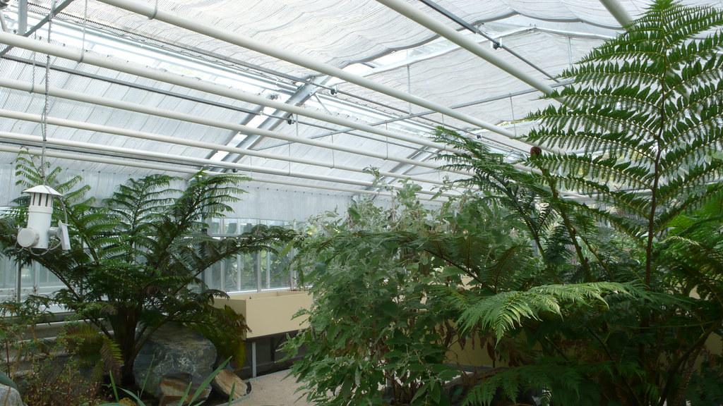 Le Jardin des plantes - 18 Septembre 2020 - Serres tropicales