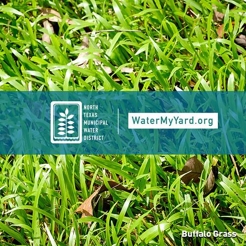 WaterMyYard.org