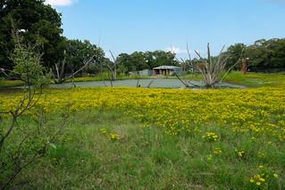 Texas Bitterweed Pond