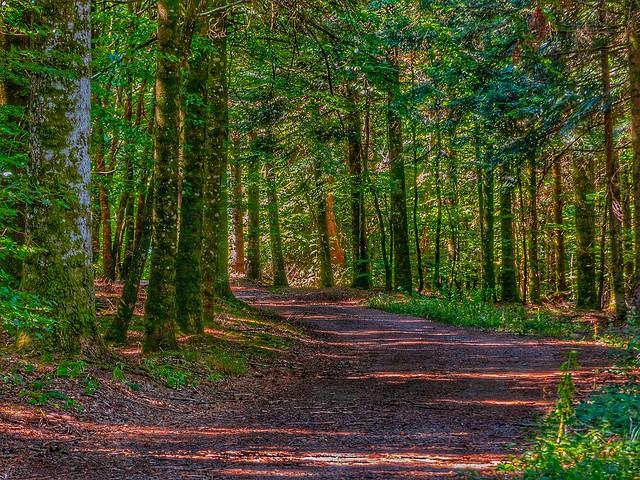 Promenons nous dans les bois....