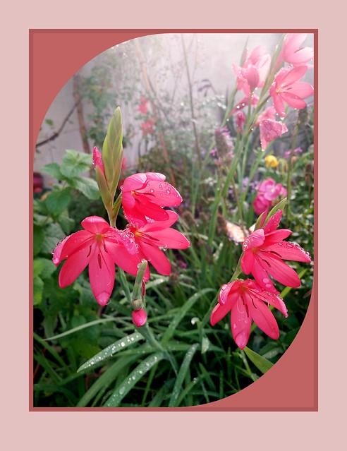 IMG_20200916_093739_1  My garden