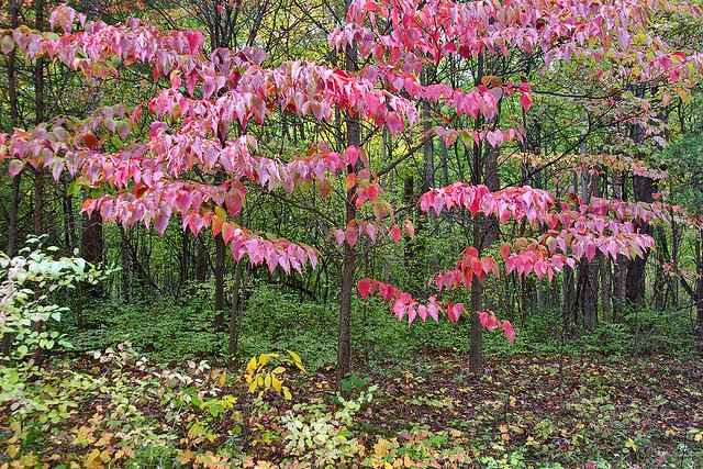 McCormick's Creek State Park. Indiana, USA.