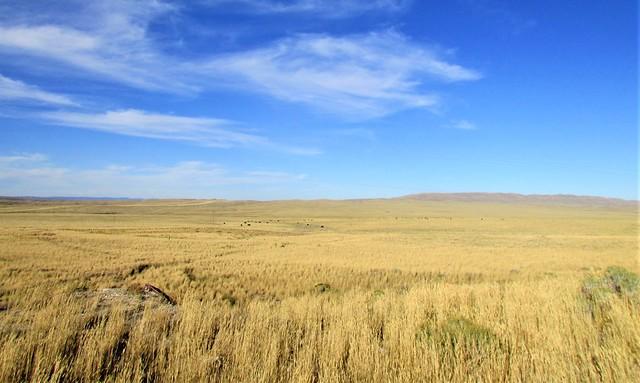 Open range country 4565