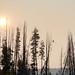 Osprey at daybreak