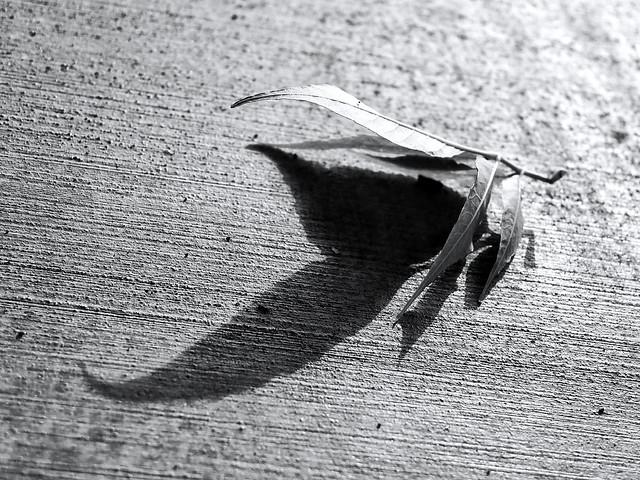 My Shadow Bird