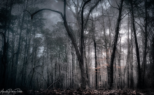 Dramatic forest