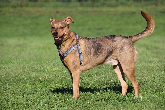 Visit with Runyon to Swift Run Dog Park (Ann Arbor, Michigan) - September 18th, 2020