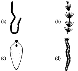 Biology MCQs for Class 12 with Answers Chapter 1 Reproduction in Organisms Q31