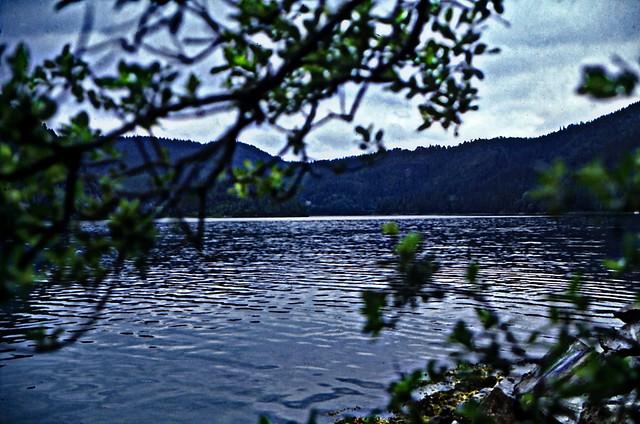 Norwegen 1998 (706)Trøndelag