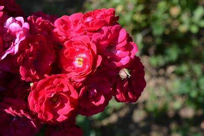 Album with free roses