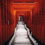 Torii gates at the Hie Shrine Tokyo