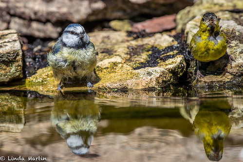 Seeing Double! | by Linda Martin Photography
