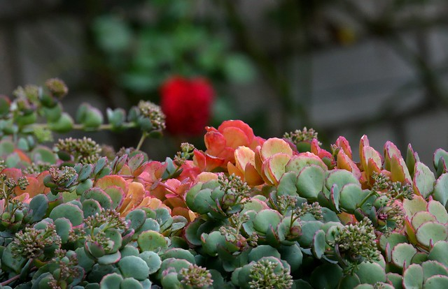 late summer (2)