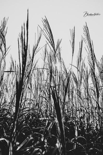In the dark rustling grass