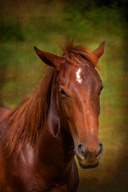 Pferd...