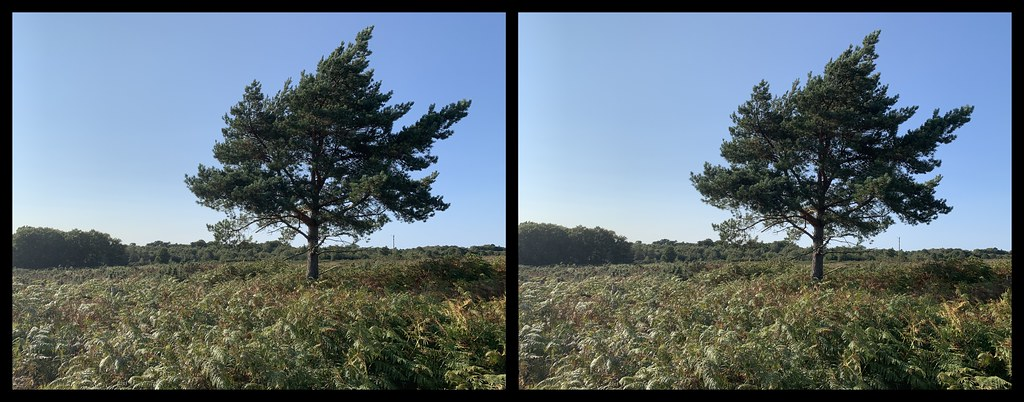 3D parallel view - Walking in the Ashdown Forest, bear Chelwood Gate