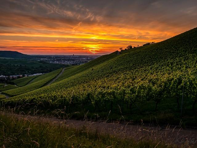 Sundown and vineyards
