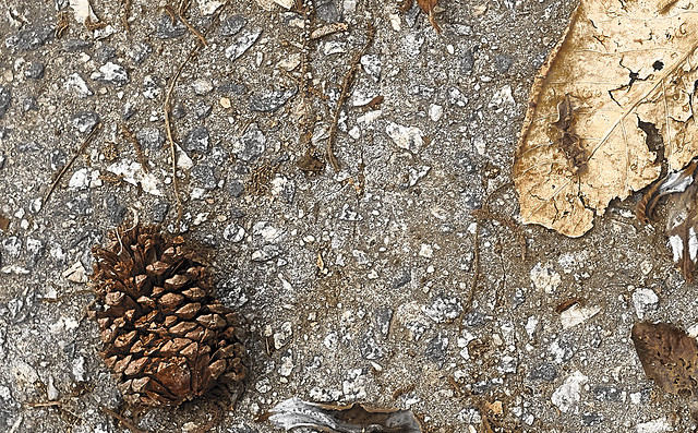 pine cone and leaves.