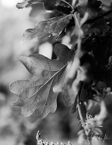 september autumn sunrise geels forest holte copenhagen prime afsdxnikkor35mmf18g nikond7500 bw blackandwhite