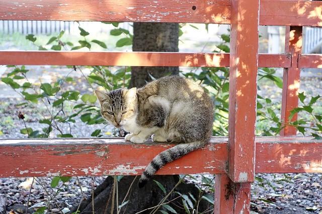 Today's Cat@2020ー09ー19