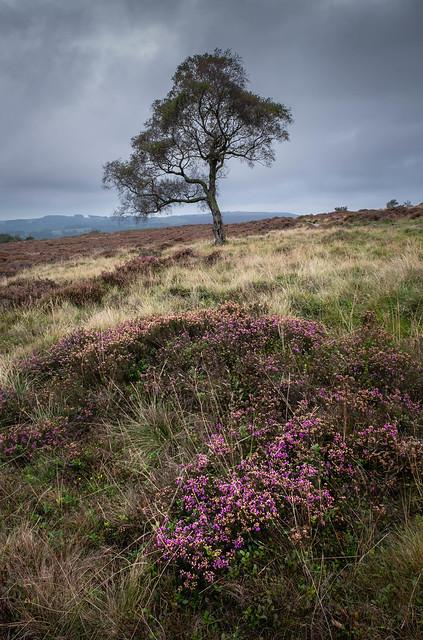 Lawrence Field Lone Tree