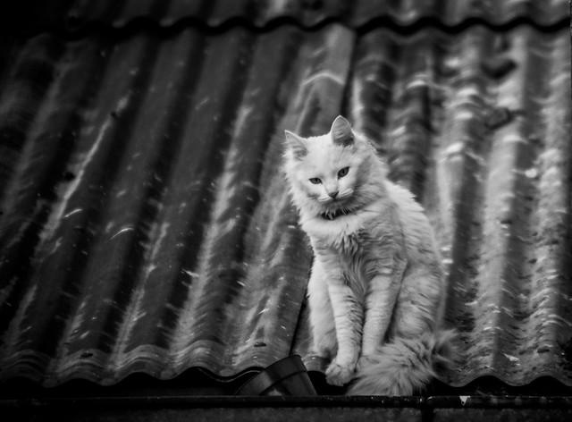 Kitten on the edge