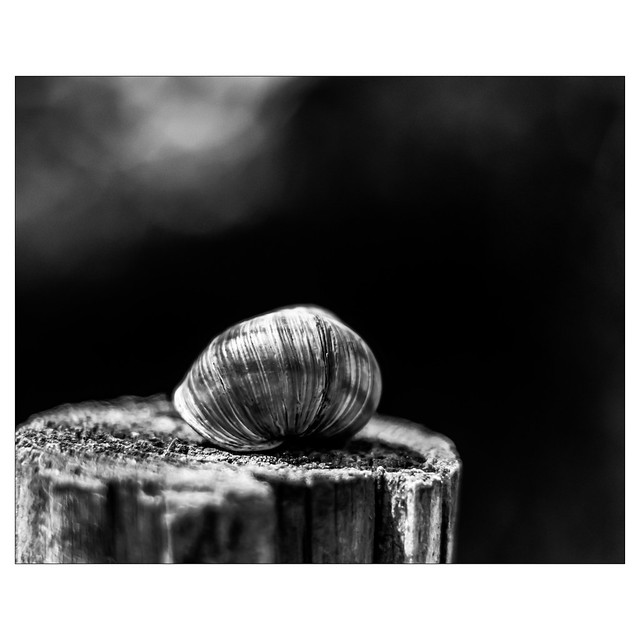 Snail on a post