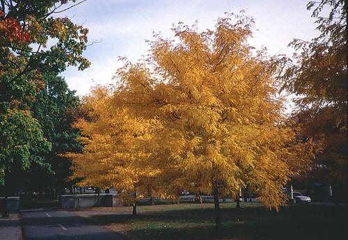 Autumn on the Esplanade