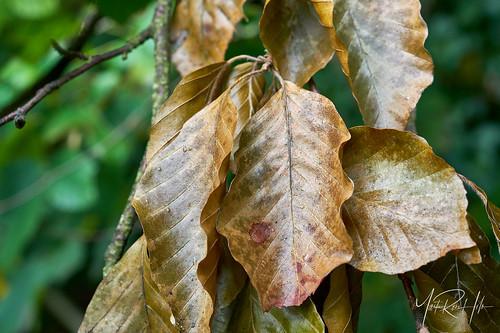 september autumn sunrise geels forest holte copenhagen prime macro nikonafsmicronikkor60mmf28ged nikond7500