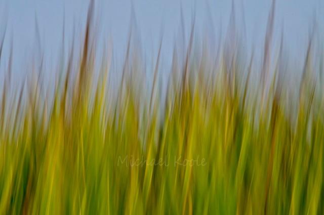 Corn Abstract #Shoot52, Week38