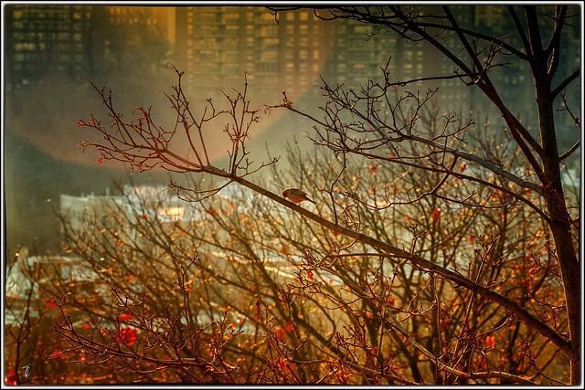 When three blend into one... The bird, the city, and the sun.