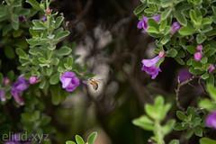 Landing Bee.