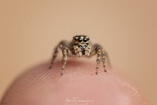 My little friend | by Gabriel Paladino Photography
