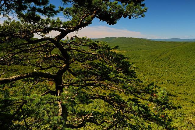 Halfmoon Mountain: Crazy tree