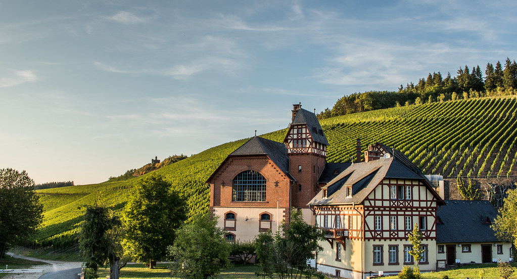 Gut Avelsbach - Winery & Vineyard in the Evening
