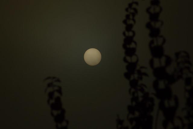 DSC_0847   Sonnenaufgang Nebel