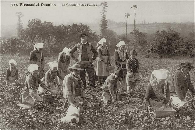 Plougastel-Daoulas - Finistère - CPA