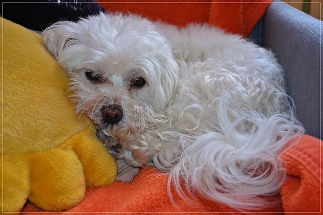 9/12 sleepy Fela :)