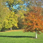 Leaves changing in the park