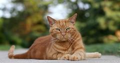 La gatta Rosella