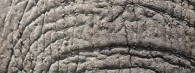 Savanna elephant close up, Katavi National Park, Tanzania