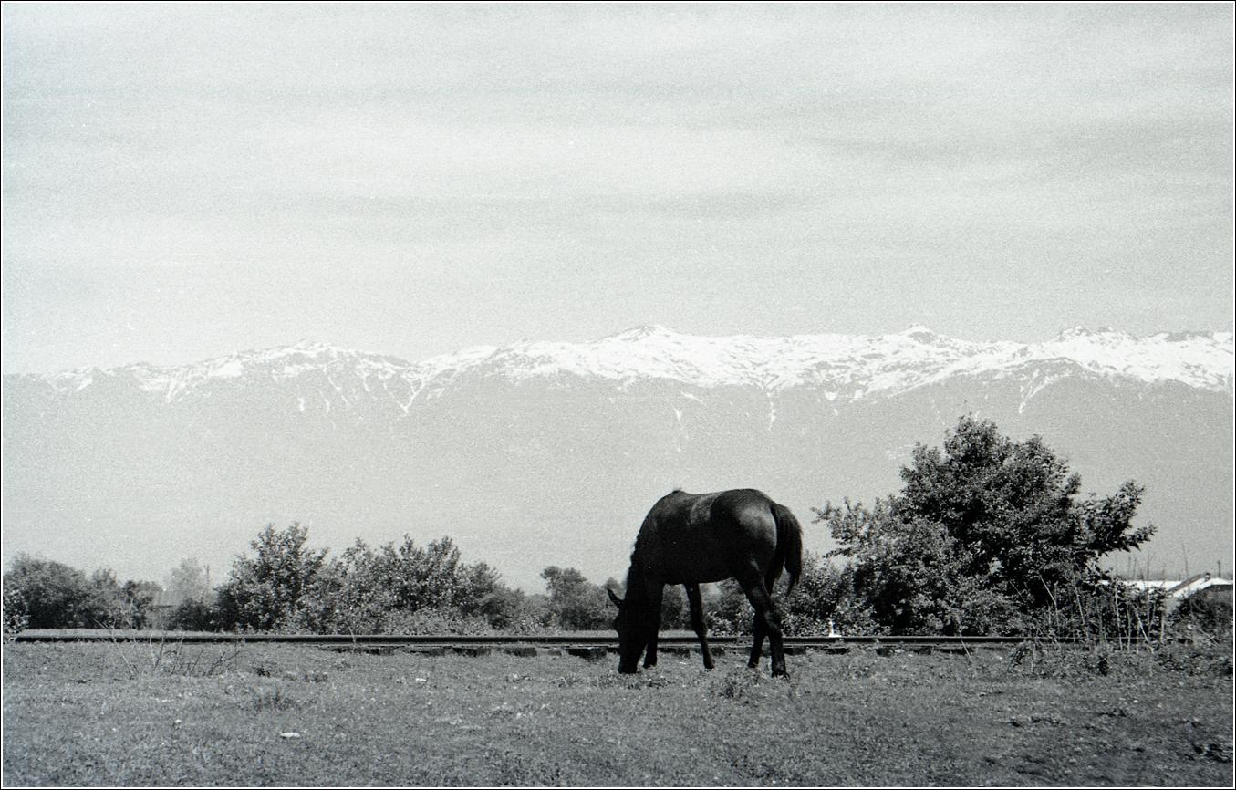 1960. Абхазия, сентябрь