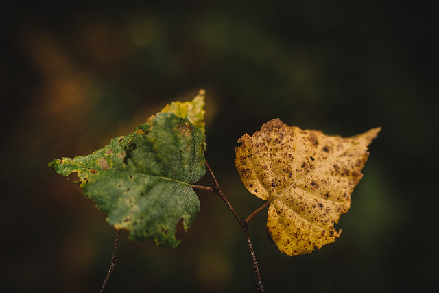 Simply leaves #3